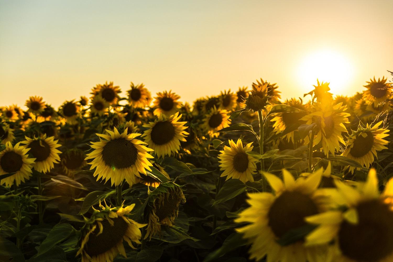 Güneş Merkezli Yaşamak